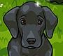 Speel het nieuwe girl spel: Duitse Dog Verzorgen