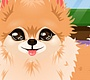 Play the new Girl Flash Game: Groom That Puppy